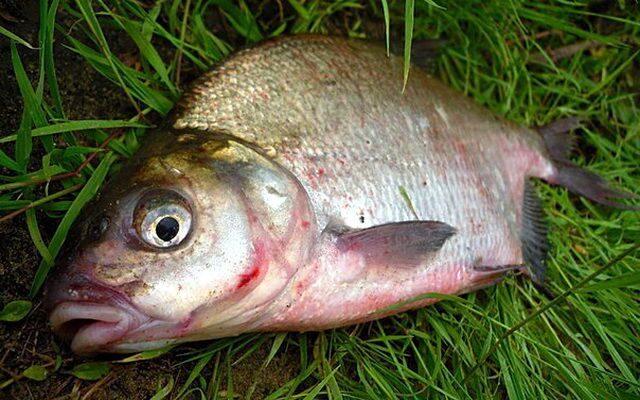 как сделает чем заражена рыба в выборгском заливе государственный университет гражданской