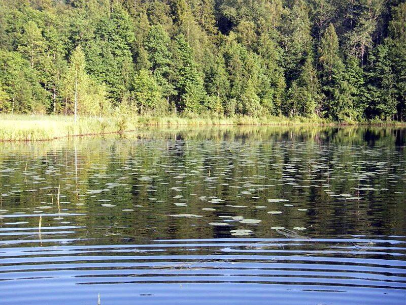 озера в ленинградской области для рыбалки с берега
