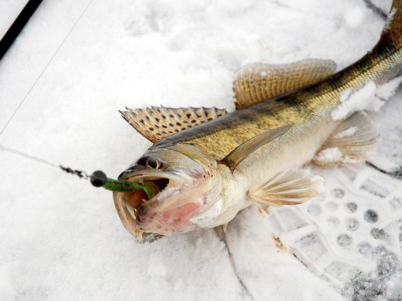 какая рыба ловится на тесто