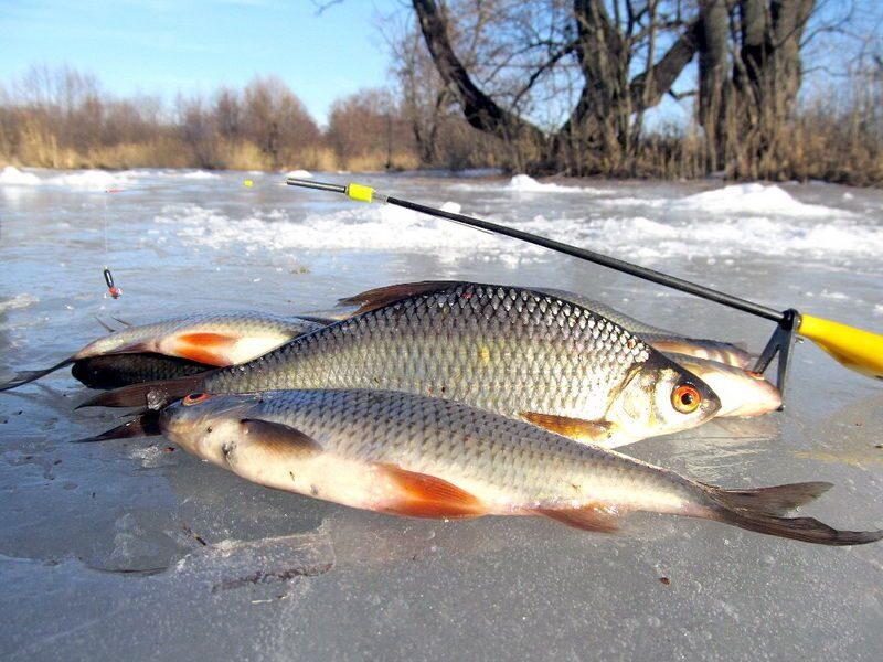 когда клюет рыба зимой календарь