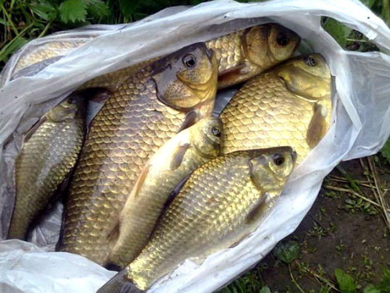 рыбалка на карася в костромской области