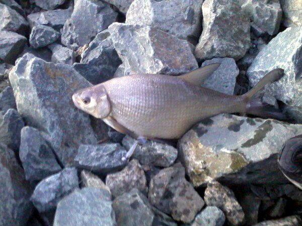 удочки для летней рыбалки без колец