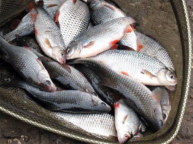 в мутной воде клюет ли рыба