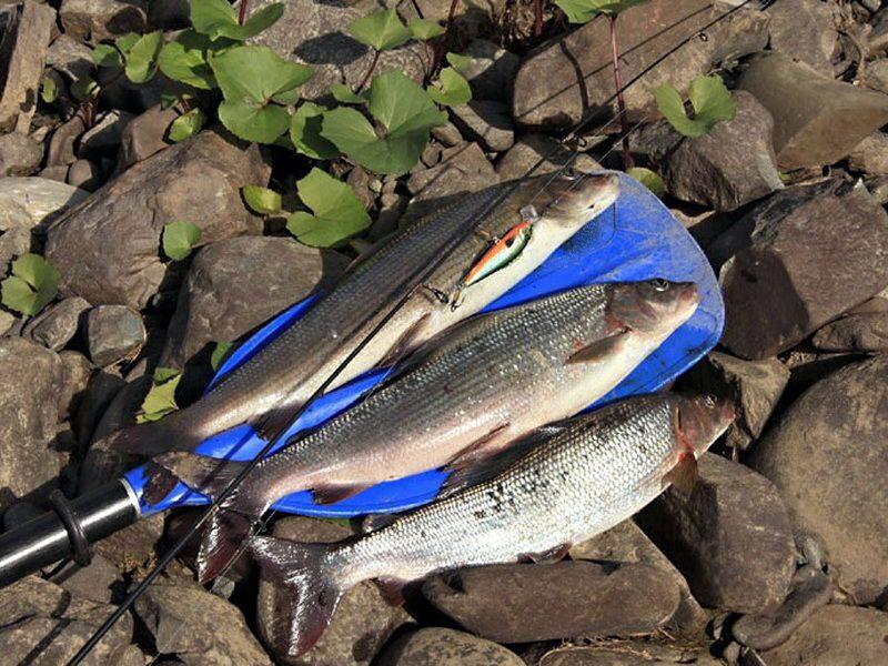 рыбалка в крыму на озерах 2018