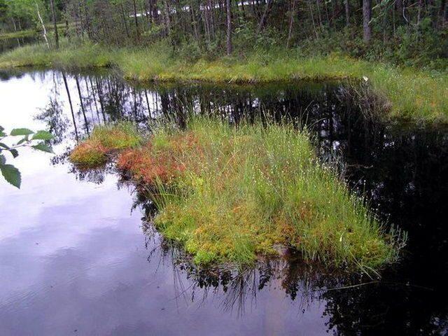 красное озеро ленинградская область рыбалка