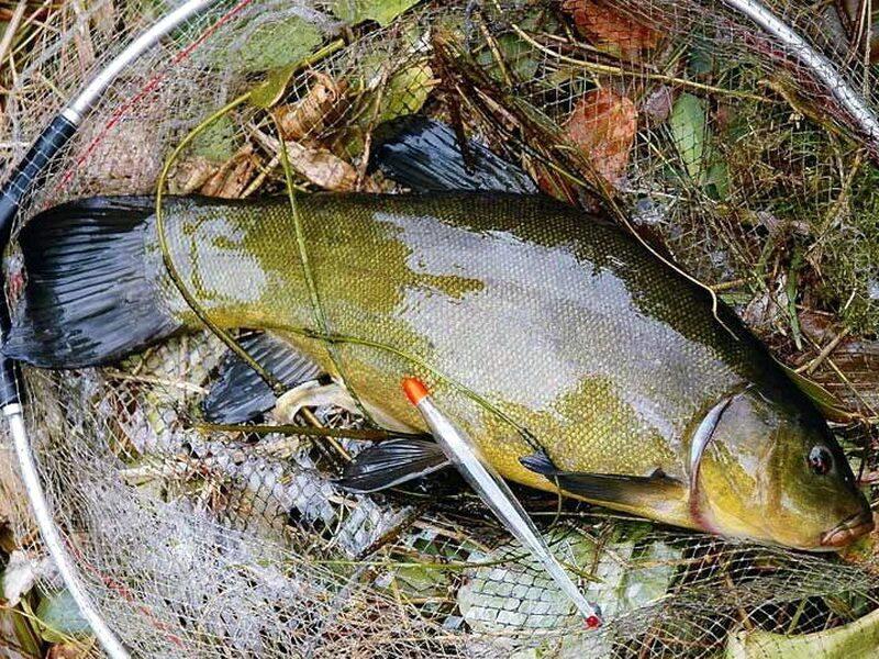 клев рыбы на озерах весной