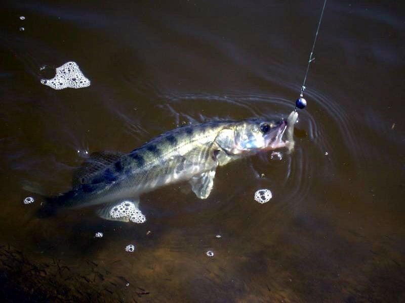 способы ловли рыбы с берега
