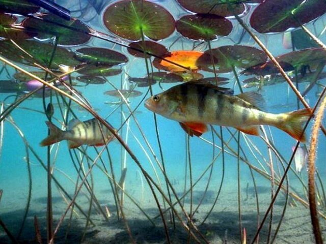 способы ловли рыбы летом на озере