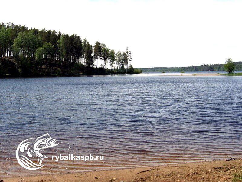 медное озерко рыбная ловля  ленинградская область