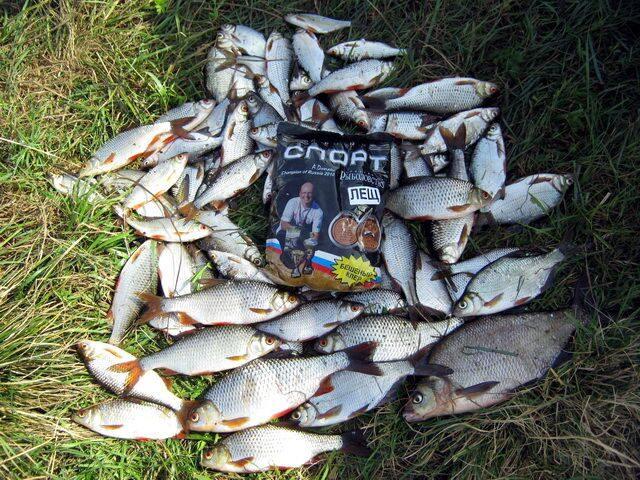 Рыбалка на березине в районе березино