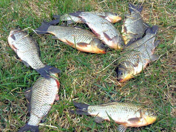 способы прикормки рыбы