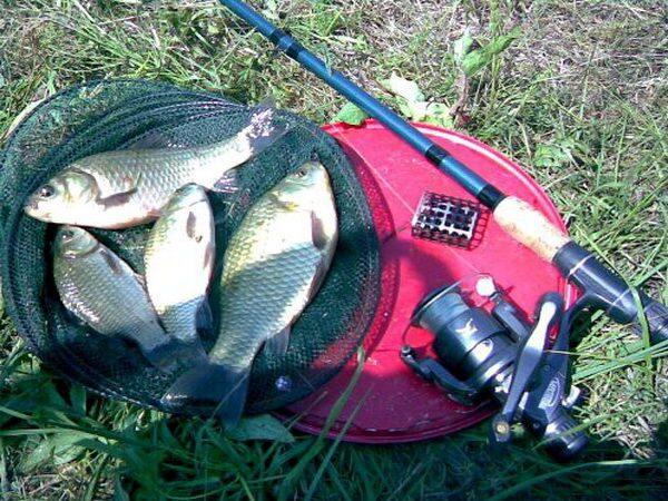 рыбалка на карпа заброс фидера