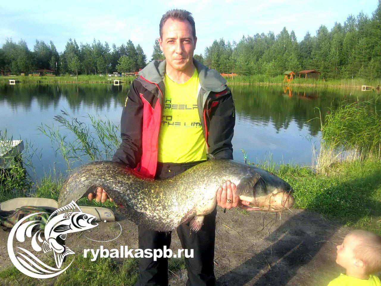где в ленинградской области ловить карпа