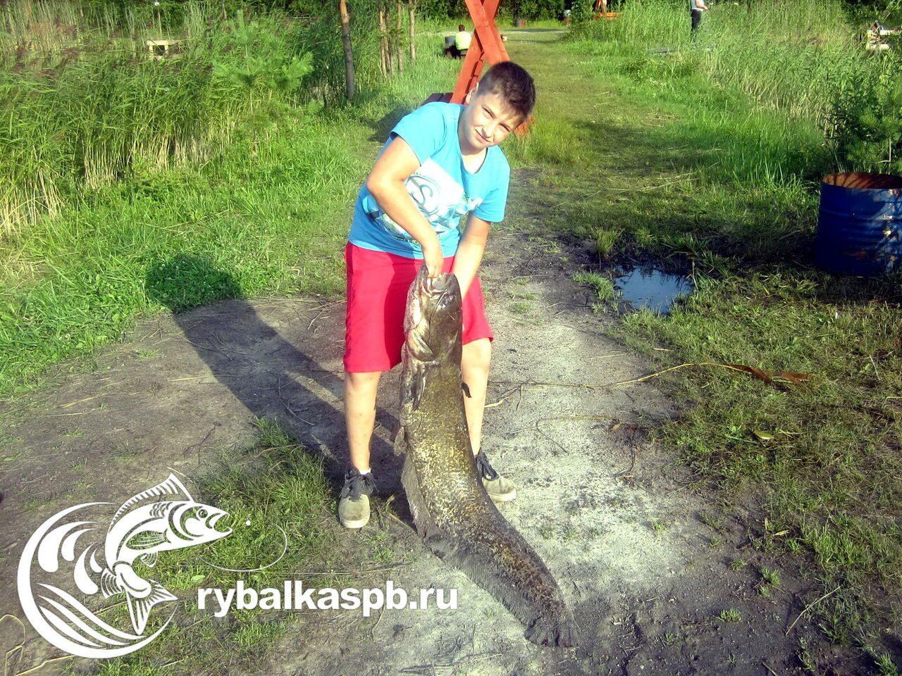 рыбалка в лепсари официальный сайт цены