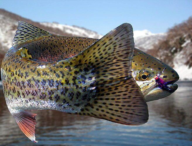 рыба не ловится нахлыстом