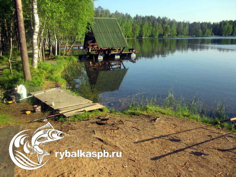 Рыбацкий сайт ленинградской области