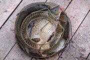 Рыбалка в Коваши - фиксированная цена!