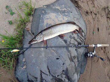 Что можно поймать в реке Свирь