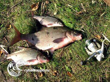Рыбалка на озере Зеркальное Ленинградская область